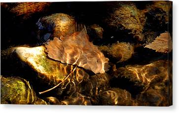 Shallow Beauty Canvas Print by Steven Milner