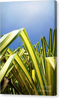 Canvas Print featuring the photograph Shape Of Hawaii 9 by Ellen Cotton