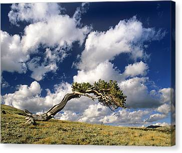 Shape Of The Wind Canvas Print by Bijan Pirnia