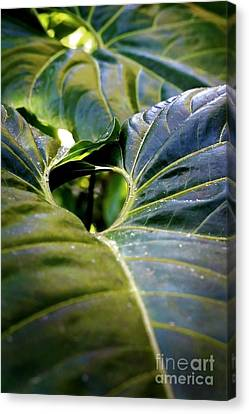 Canvas Print featuring the photograph Shapes Of Hawaii 11 by Ellen Cotton