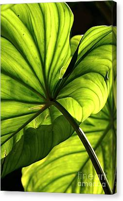 Shapes Of Hawaii 12 Canvas Print by Ellen Cotton