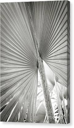 Canvas Print featuring the photograph Shapes Of Hawaii 8 by Ellen Cotton