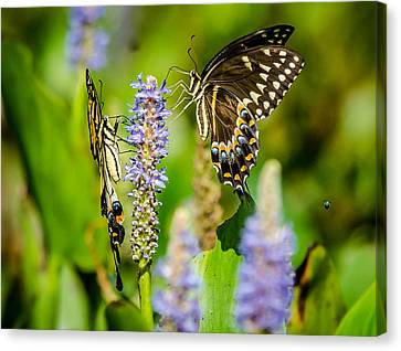 Sharing A Drink Canvas Print