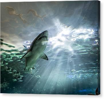 Shark Canvas Print by Igor Baranov