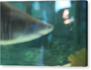 Shark - National Aquarium In Baltimore Md - 121210 Canvas Print by DC Photographer