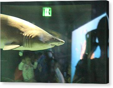 Harbor Canvas Print - Shark - National Aquarium In Baltimore Md - 12127 by DC Photographer