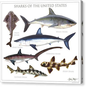 Sharks Of The United States Canvas Print by Nick Mayer