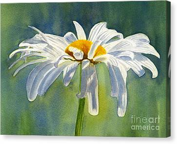 Shasta Daisy Blossom With Blue Background Canvas Print by Sharon Freeman