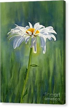 Shasta Daisy Flower With Blue Green Background Canvas Print by Sharon Freeman