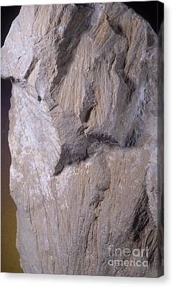 Shatter Cones, Barringer Crater Canvas Print by Gregory G. Dimijian, M.D.