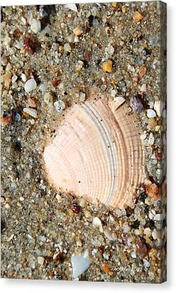 Canvas Print featuring the photograph She Sells Sea Shells by Dick Botkin
