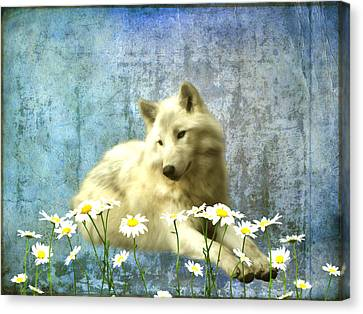 She Wolf Canvas Print by Sharon Lisa Clarke