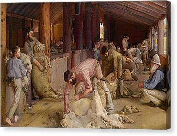 Shearing The Rams  Canvas Print