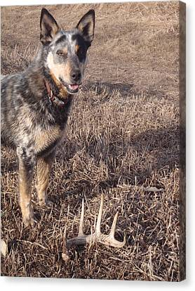 Shed Hunting Canvas Print