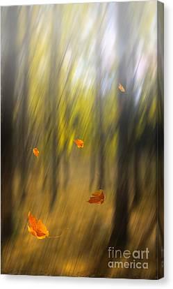 Harmonious Canvas Print - Shed Leaves by Veikko Suikkanen