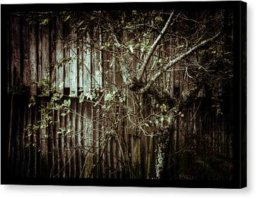 Shed Of Memories Canvas Print by Darryl Gibbs