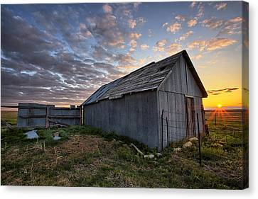 Barbed Wire Canvas Print - Shedded Rising by Thomas Zimmerman