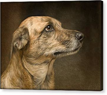 Sheeba Canvas Print by Hazel Billingsley