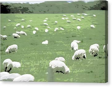 Sheep Canvas Print by A K Dayton