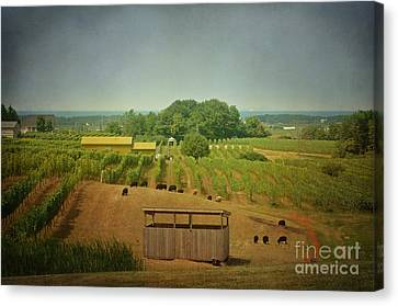 Sheep Among The Vineyards Canvas Print by Maria Janicki