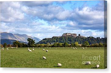 Sheep And Stirling Castle Canvas Print by Jane Rix