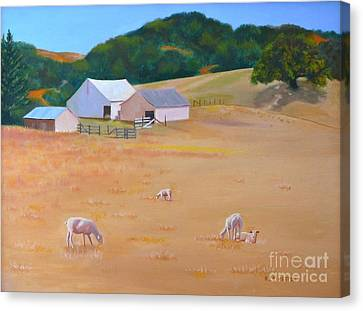 Canvas Print featuring the painting Sheep At Redhill Farm by K L Kingston