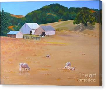 Sheep At Redhill Farm Canvas Print