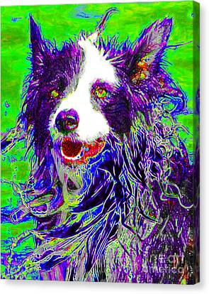 Sheep Dog 20130125v4 Canvas Print by Wingsdomain Art and Photography