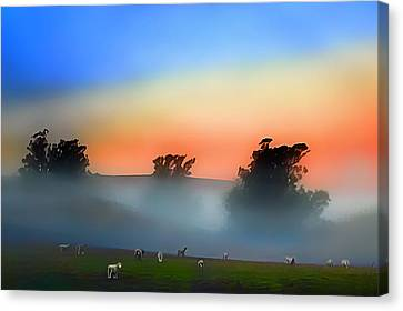 Sheep In The Early Morning Fog Canvas Print by Wernher Krutein