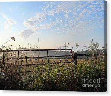 Sheep In The Meadow Canvas Print by Tina M Wenger