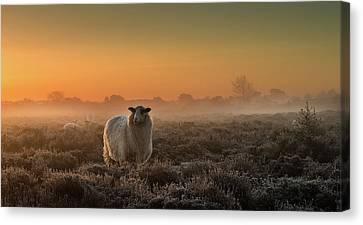 Haze Canvas Print - Sheep In The Mist by Rijko Ebens