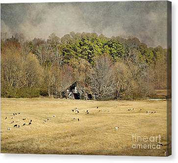 Sheep In The South Canvas Print by Jai Johnson