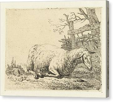 Sheep Near A Braided Fence, Print Maker Karel Dujardin Canvas Print