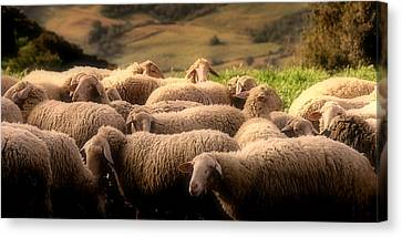Sheep On A Hillside Canvas Print by Andrew Soundarajan