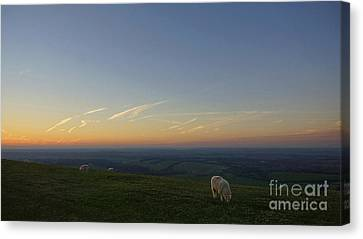 Sheep On The Gibbit Canvas Print