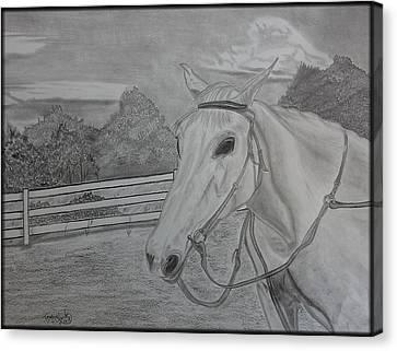 Sheika Canvas Print by Tony Clark