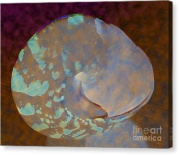 Shell Aglow Canvas Print by Diane DiMarco