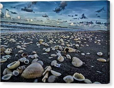 Shell Beach Canvas Print