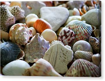 Shell Collection Canvas Print by Marty Gayler