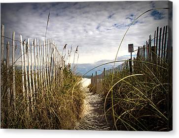 Shell Island Beach Access Canvas Print by Phil Mancuso