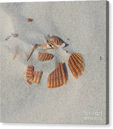 Shell Jigsaw Canvas Print by Meandering Photography