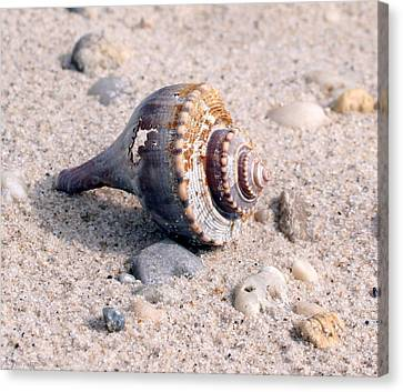 Canvas Print featuring the photograph Shell by Karen Silvestri
