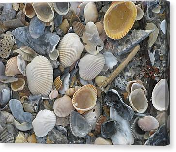 Shell Mosaic Canvas Print
