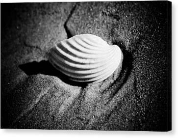 Shell On Sand Black And White Photo Canvas Print by Raimond Klavins