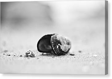 Shell On The Beach Canvas Print by Andrew Raby