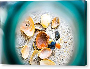Shell Paradise  Canvas Print