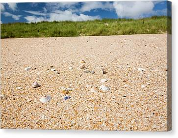 Shell Sand On The Beach With Limpet Shell Canvas Print