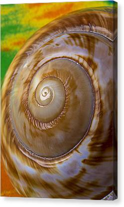 Nature Study Canvas Print - Shell Spiral by Garry Gay