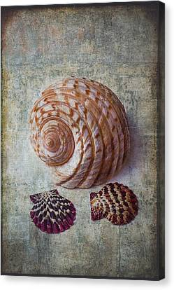 Nature Study Canvas Print - Shell Texture by Garry Gay