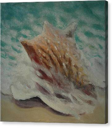 Shell Two - 2 In A Series Of 3 Canvas Print by Don Young
